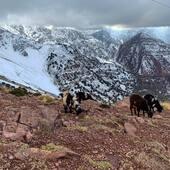 Découverte des montagnes du haut atlas marocain ❄️ Nous avons fait de très belles rencontres et avons dénicher de nouveaux trésors🤫 Nouvelle collection en ligne la semaine prochaine.  • • • #atlasmarocain #oukaimden #berbere